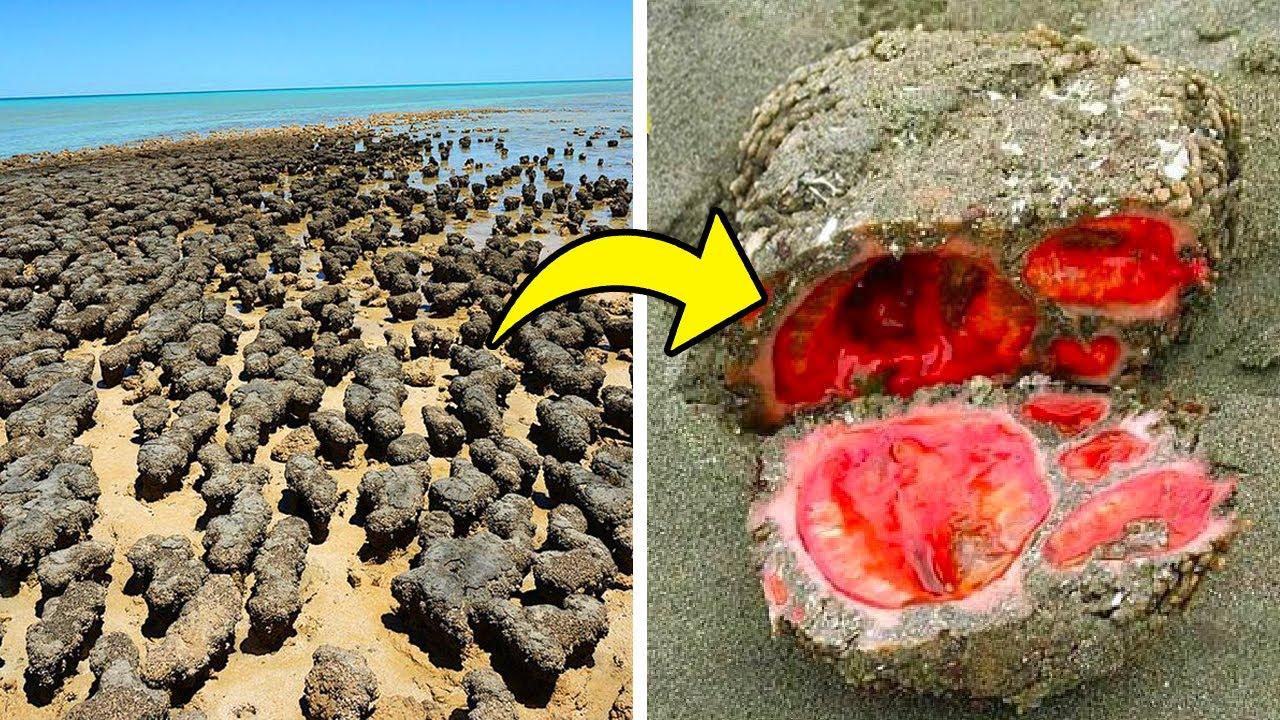 ظنوا انها مجرد حجارة على الشاطئ.. وعندما اقتربوا اكتشفوا الحقيقة الصادمة !!