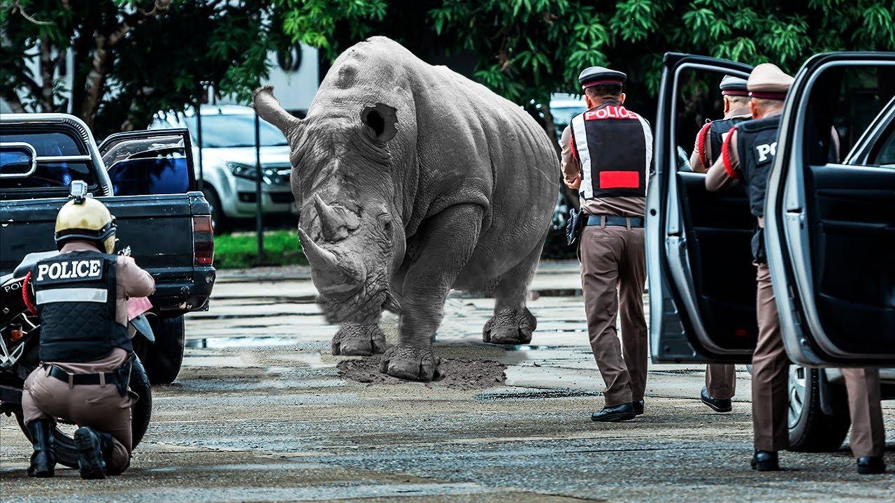 ¡Animales que escaparon del zoológico!