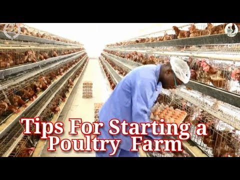 Tips for Starting a Poultry farm and Business Before Quiting your job / Chicken rearing in Kenya