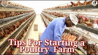 Tips for Starting a Poultry farm and Business Before Quiting your job
