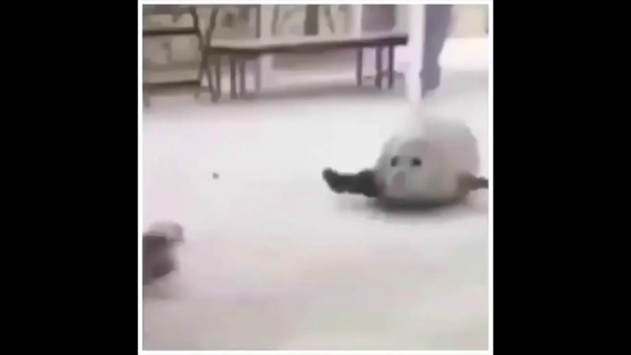 прыгающие тюлени гифка стала принципиально
