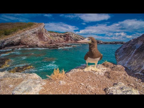 Ep 32. The Galapagos of Mexico, Isla Isabela!!