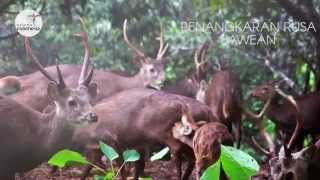 Pesona Indonesia : Pulau Bawean