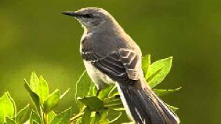 Nitty Gritty Dirt Band - Listen to the Mockingbird Live
