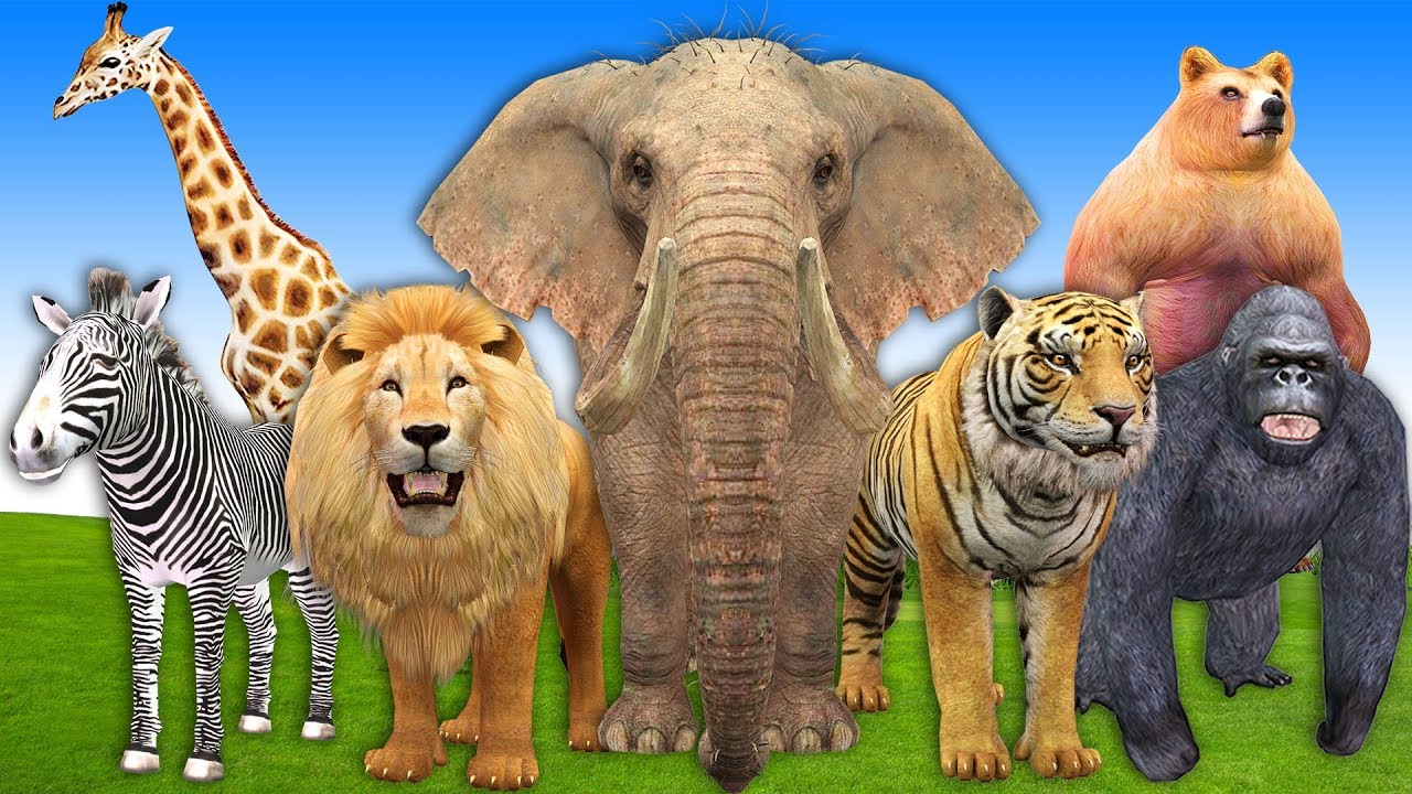 Learn Wild Animals Finger Family Song Nursery Rhymes | Learn Wild Animals Names & Sounds For Kids