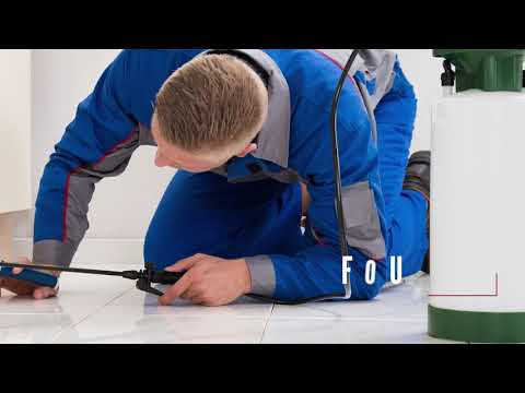pest-control-services-in-houston-tx,-details-at-yellowpages.com