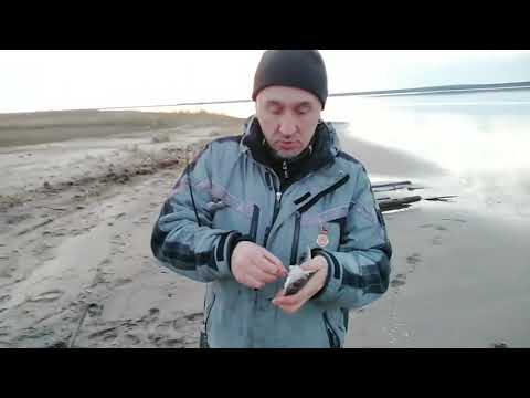 Ловим камбалу в прибрежье белого моря май 2019