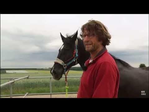 Wunschvideo Zu Uwe Weinzierl: Pferd Gefährlich, Weil Mensch Fehler Macht? Horsemanship Parelli NDR