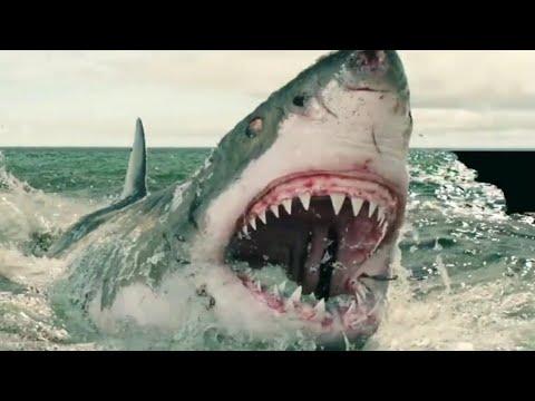 Самые лучшие фильмы про акул за всю историю кино
