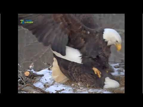 1/18/18..DHEC ~ Mating On The Nest