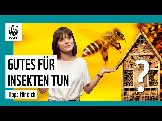 Sind Insektenhotels gut für Bienen?   Die besten 5 Tipps   WWF Deutschland