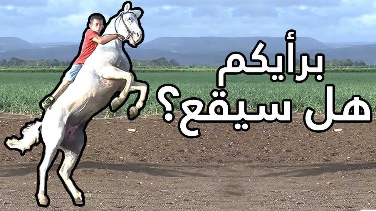 خيل وخيالة - Knight horses