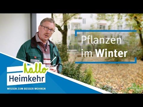 So schützen Sie Ihre Balkonpflanzen im Winter!