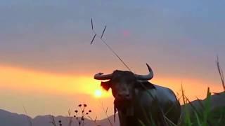 Kuv Nco Koj - Kiab Lub Neej Toj Siab |Travel Vlogs