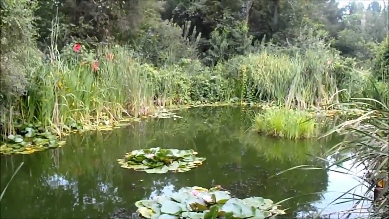 In pond photo 59
