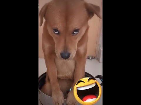 Funny Dog Videos   Happy Dog 2020