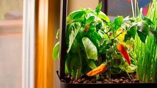 Plants & Aquaponics