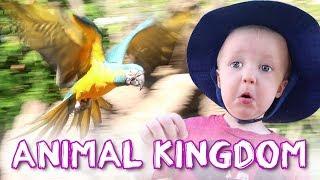 Animal Kingdom in Disney World