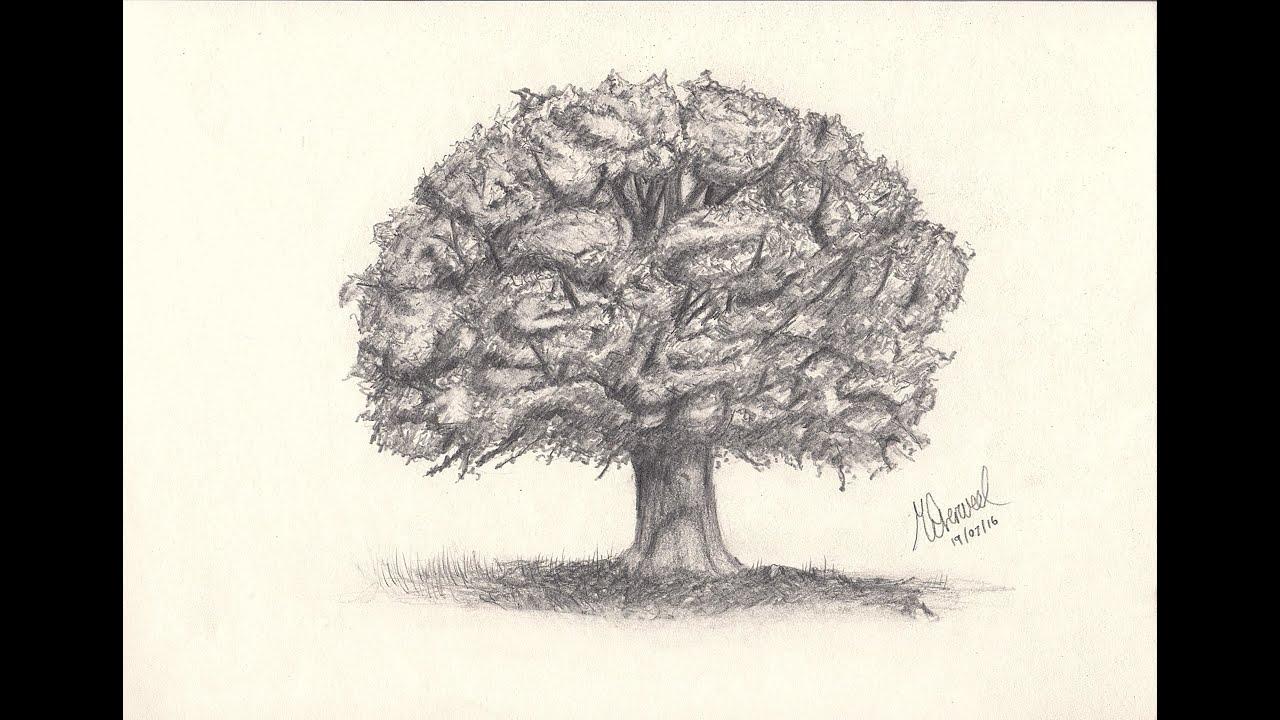 Oak Tree Drawing - YouTube