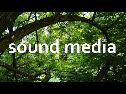 🎵 NATURE AMBIENCE Background Sound Effects [Free Stock Download No  Copyright