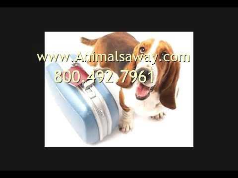 Need Pet Transport To Bogota Call Animals Away