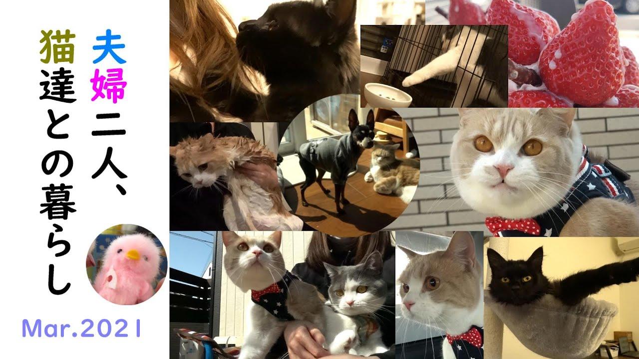 夫婦二人と猫達の1ヶ月総集編🐶😺💕 Mar 2021