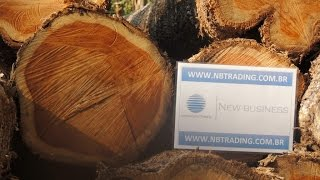 Teak Round Logs Tectona Grandis NBTrading Brazil