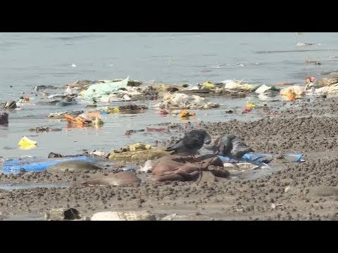 Mumbai Lawyer Launches World's Largest Beach Cleanup Campaign