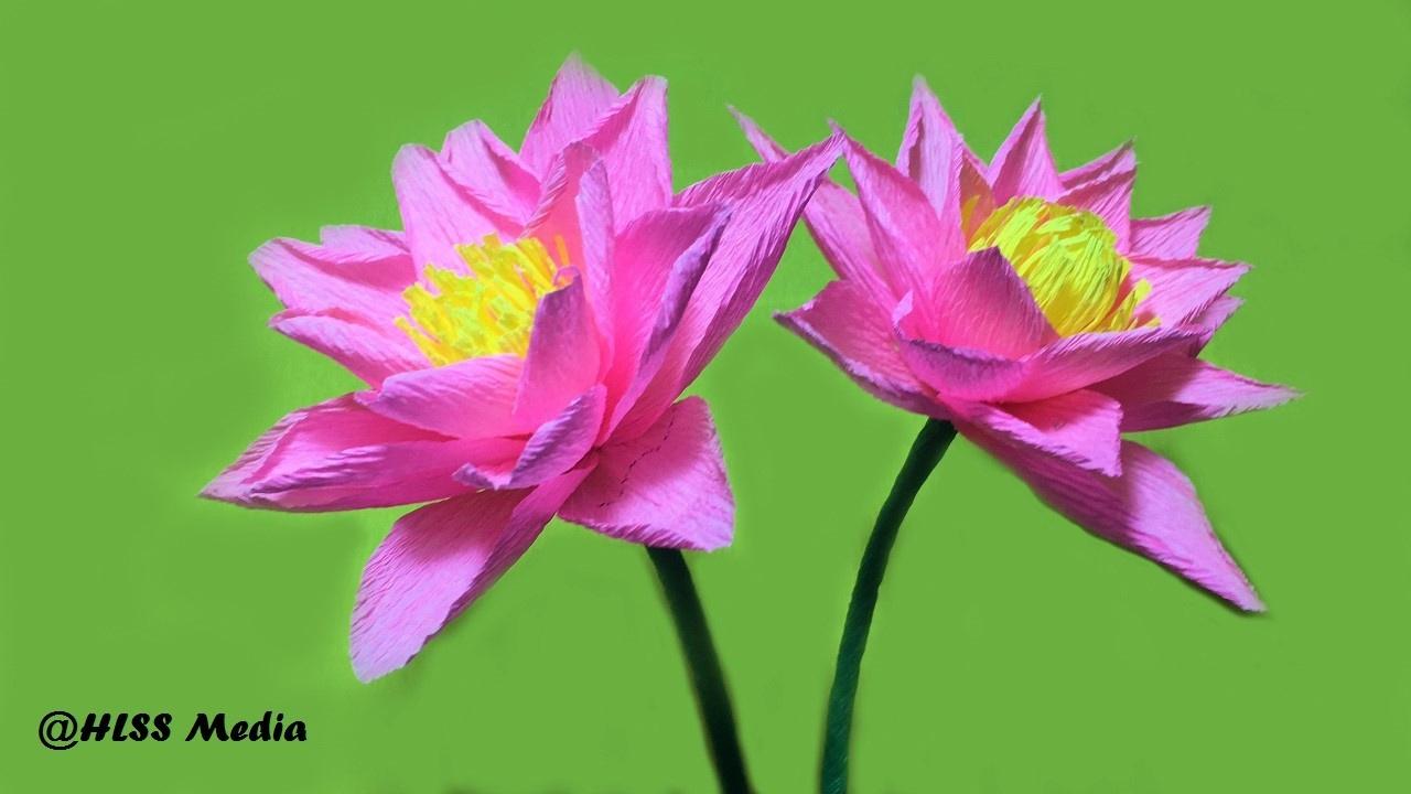crepe paper lotus flower - Selo.l-ink.co