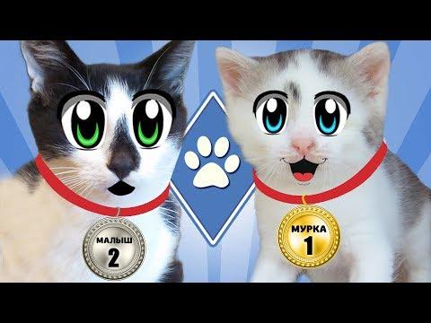 ЧЕЛЛЕНДЖ ДЛЯ КОТОВ! кот МАЛЫШ и кошка МУРКА и УРОК ГИМНАСТИКИ? Школа котов