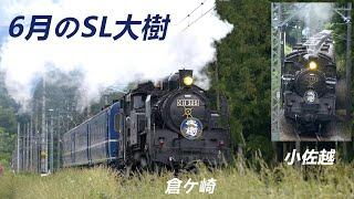 6月の蒸機「SL大樹」(C11型325号機牽引)、東武鉄道鬼怒川線