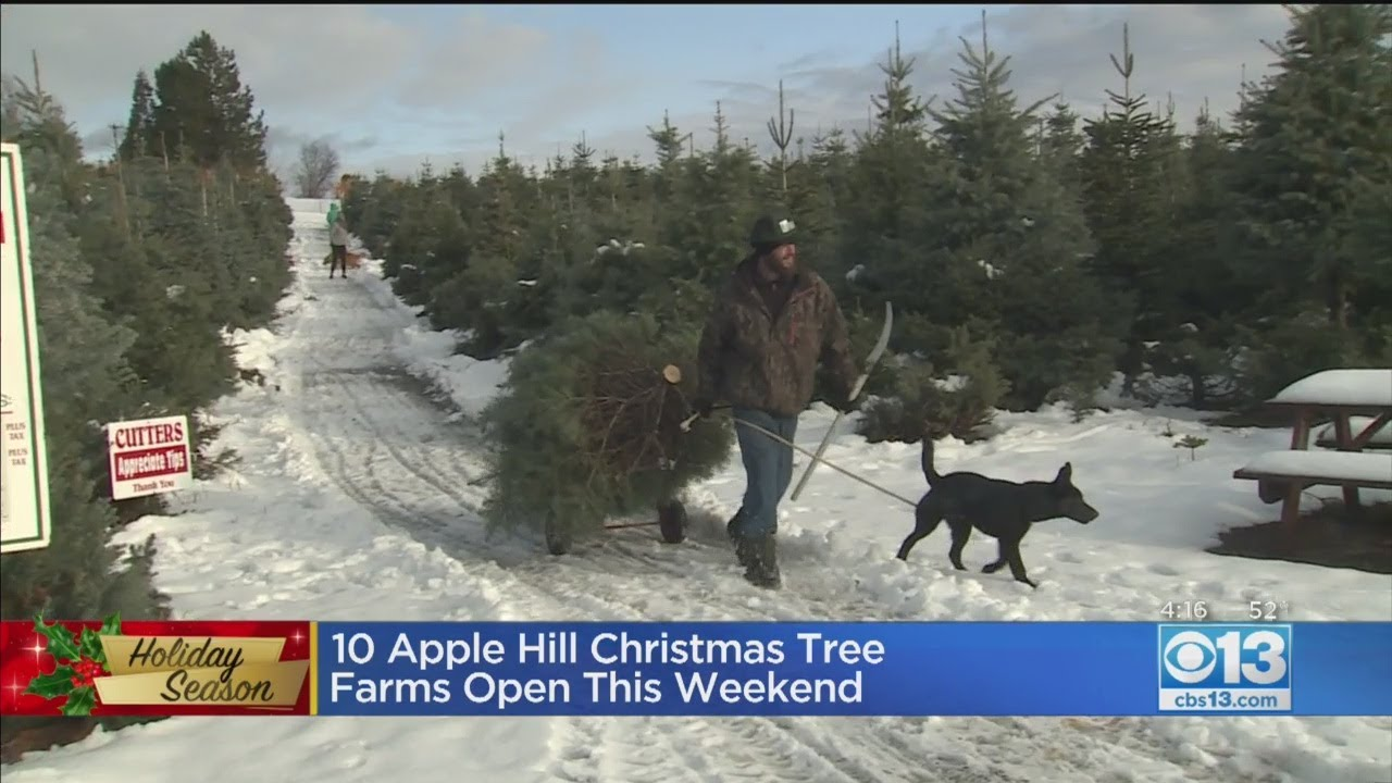 10 Apple Hill Christmas Tree Farms Open