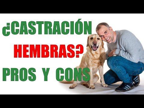 CASTRACIÓN HEMBRAS- Ventajas y Desventajas de VACIAR A TU PERRA