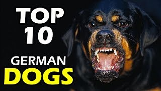 TOP 10 GERMAN DOG BREEDS IN THE WORLD