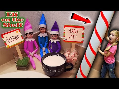 Purple & Pink Elf On The Shelf - Growing The World's Biggest Candy Cane With Blue Elf! BONUS DAY