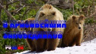 ТОП 5 КРАСИВЕЙШИХ ЗАПОВЕДНИКОВ РОССИИ