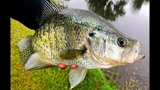 Catching GIANT CRAPPIE! Tips For Targeting Big Slabs.