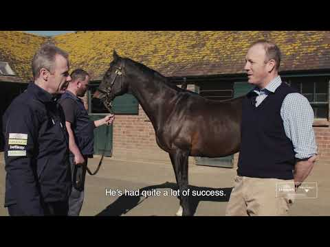 The Extraordinary Tour - Overbury Stud