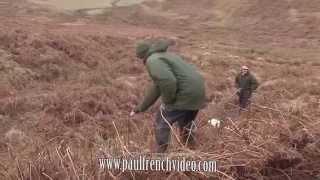 Watch Int FTCh Hollydrive Theo at The English Springer Spaniel Championship