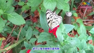 臺北市立動物園的昆蟲館,受到許多攝影愛好者的青睞,也是很多單位或團...