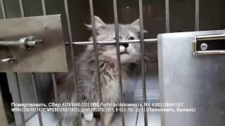 Лечим котенка после панлейкопении homeless kitten is sick |  shelter for animals need help