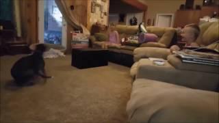 Drift dog :) Funny video cut