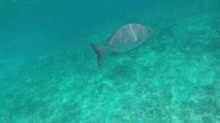 Chankanaab Snorkeling & Dolphins, November 2018