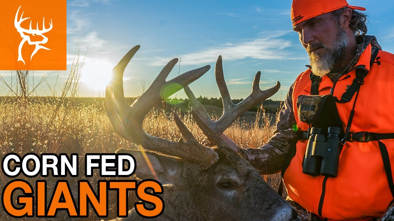 Download TOMBO KNOWS BUCKS   Nebraska GIANTS   Buck Commander   Full Episode