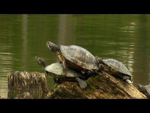 Édeni főbérlők 1.rész (HD) magyar amatőr természetfilm ( with english subtitle )