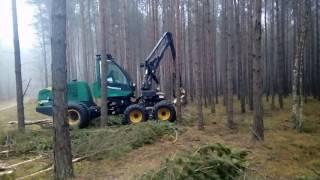Praca w lesie