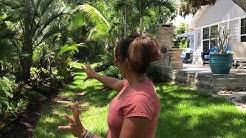 Backyard tour of Florida plants that last.
