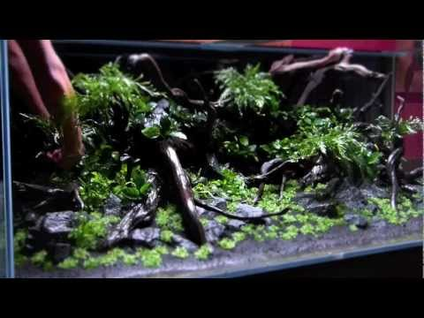 Teil 1: Diskus Aquascape 'River Side' by Adrie Baumann von Aquascaping Symphony
