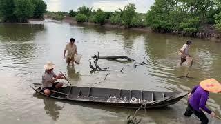 Cả Xớm Kéo Nhau Đi Bắt Cá Mà Bắt Không Hết Nổi - T359