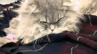 Кот после наркоза. Cat Bonya comes out of the anesthesia.